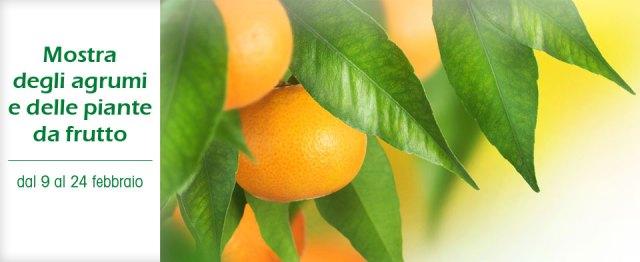 Mostra degli Agrumi e delle Piante da frutto