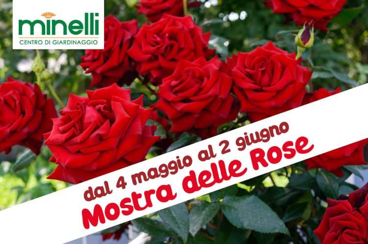 cartolina mostra delle rose