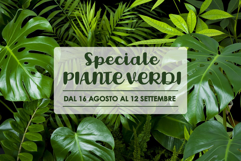 Speciale Piante Verdi