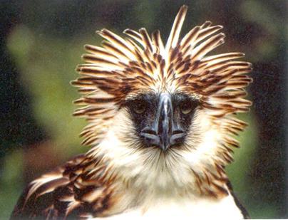 feather alert!