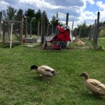 Faith Gong: Why Keep A Garden, Chickens, Or Children?