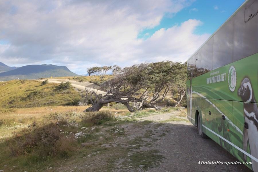 Penguin tour on Isla Martillo, Ushuaia with Pira tour