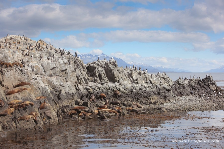Wild life on the Beagle channel boat trip in Ushuaia, Argentina