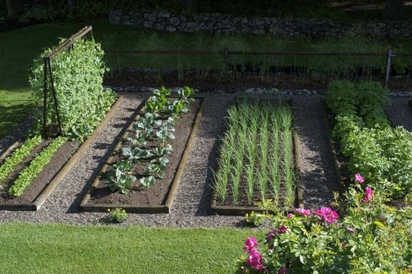 40 vegetable garden design ideas - What you need to know? on Vegetable Garden Ideas For Backyard id=71976