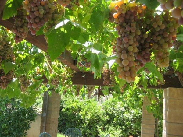 30 fascinating grape arbor ideas - the perfect patio decor on Vine Decor Ideas  id=24109