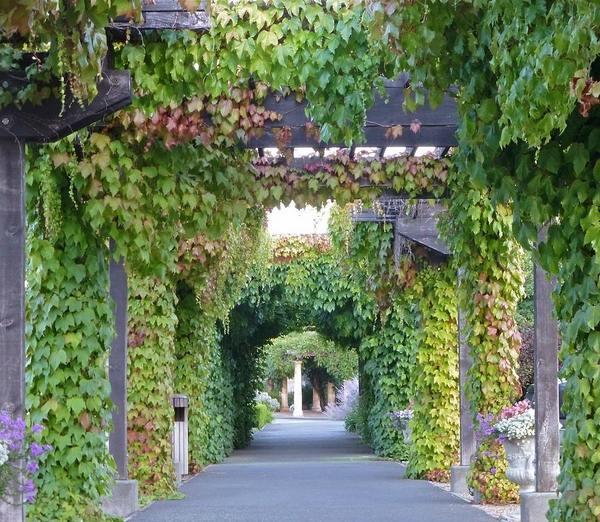 30 fascinating grape arbor ideas - the perfect patio decor on Vine Decor Ideas  id=23170