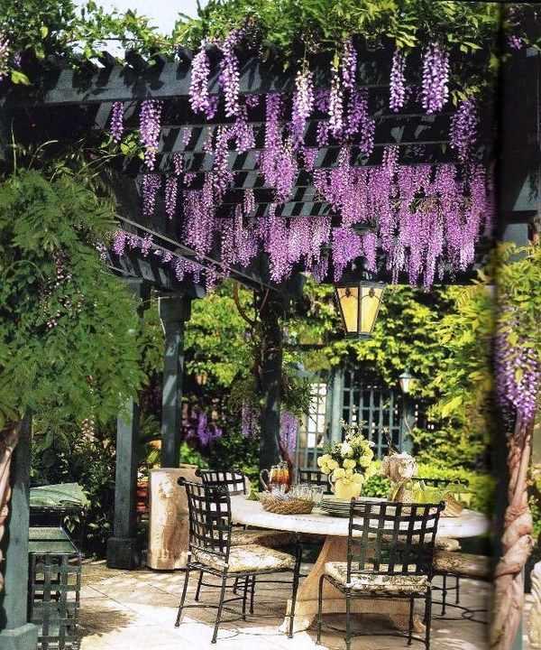 Wisteria vine for the patio landscape - a magnificent ... on Vine Decor Ideas  id=90771