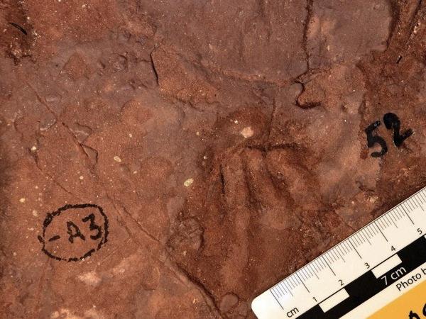 Huge unknown mammal tracks found in African diamond mine