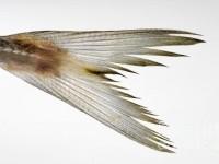 fish-tail-josep-m-penalver