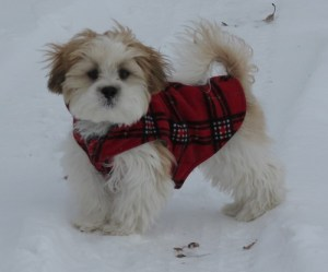 Buddy in a red plaid jacket