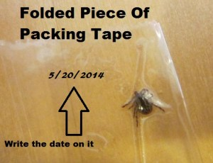 tick from dog in tape