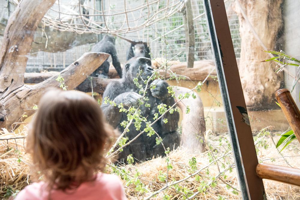 Ausflugstipps für Familien im Raum Zürich. Hier: Im Zoo Zürich