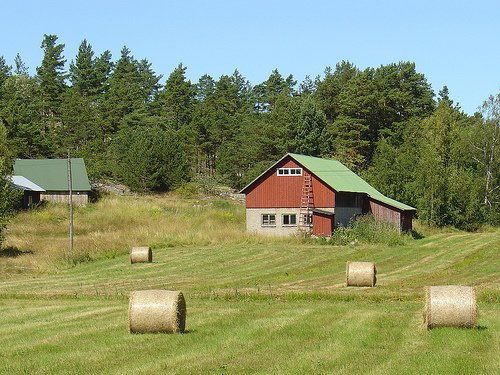 Visit to the Farm | Guest Post by Nana
