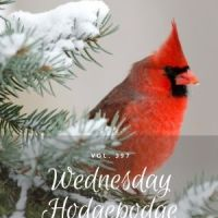 Wednesday Hodgpodge Vol. 397