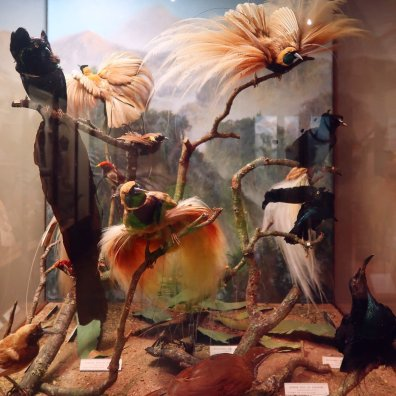 Things to do in Bristol - Bristol Museum _ Art Gallery taxidermy birds CREDIT_ © Minka Guides
