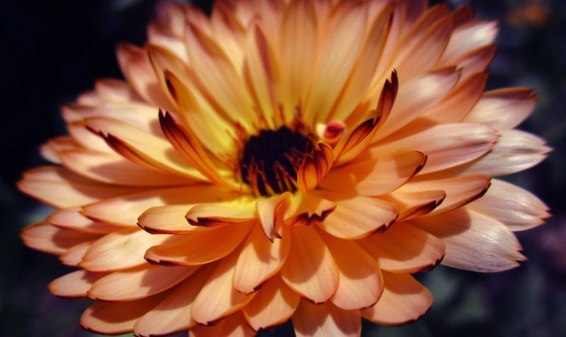 Spring in London - Kew Gardens CREDIT Karina Lad-Unsplash