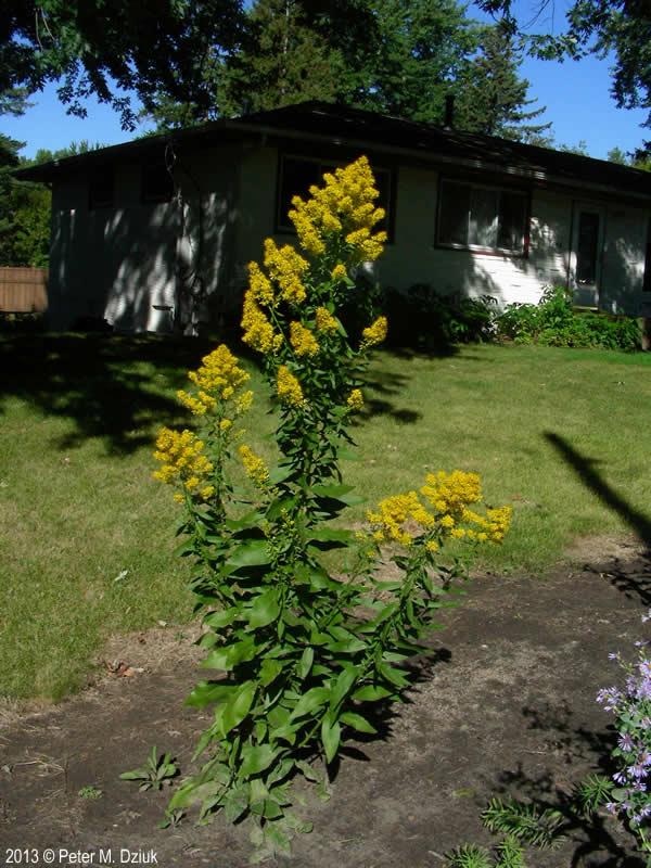 What Plant My Flower Garden