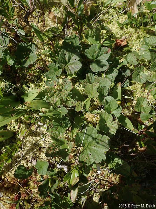 List Plants Grow Leaves