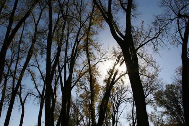 The sun blazes through cottonwoods in Tee Pee Tonka Park.