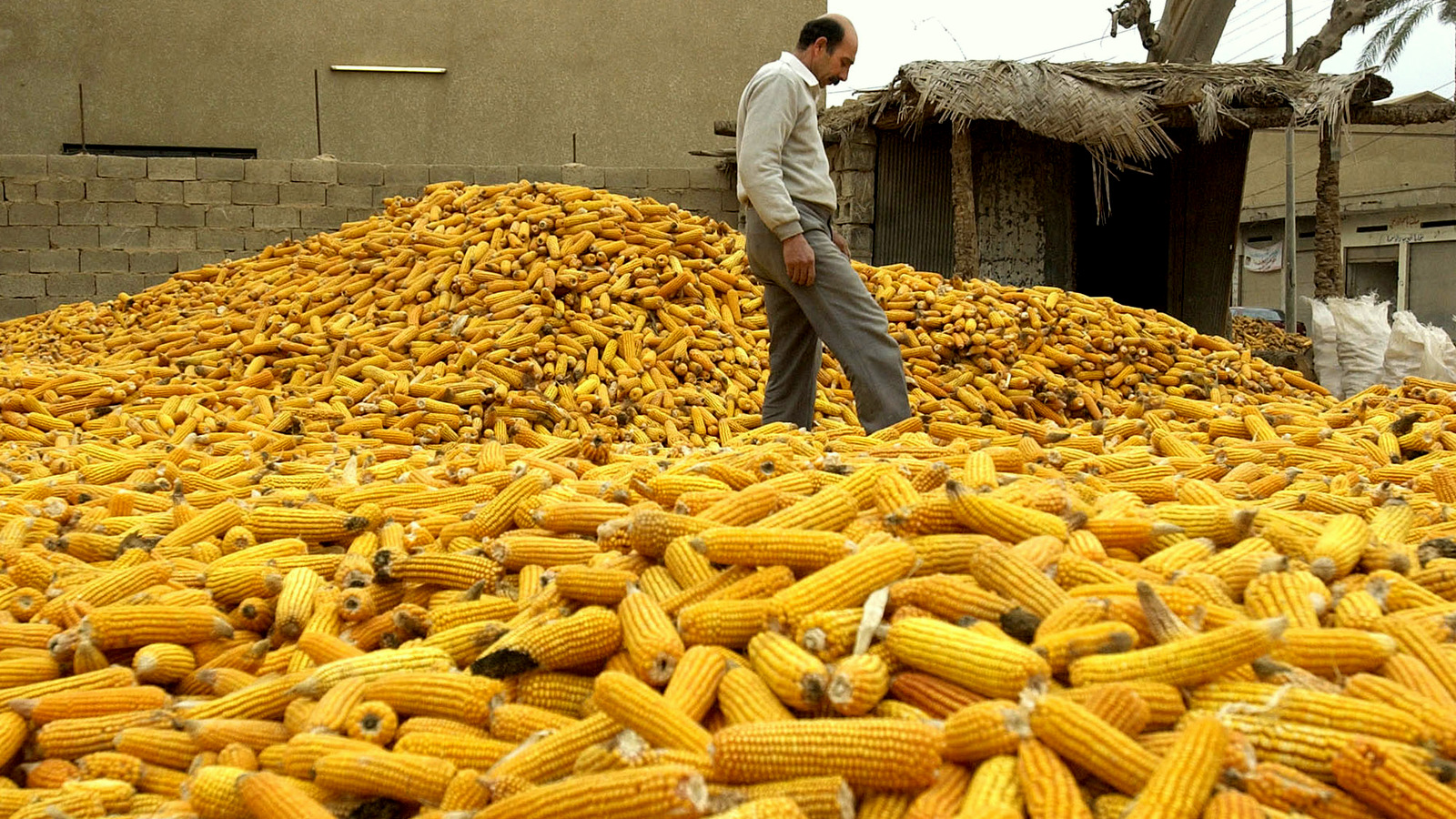 An Iraqi corn broker walks through his supply while preparing it to be shipped to retail markets Monday, Jan. 5, 2004 in a village north of Baghdad. (AP Photo/Julie Jacobson)