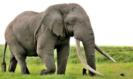 elephant clermont-ferrand