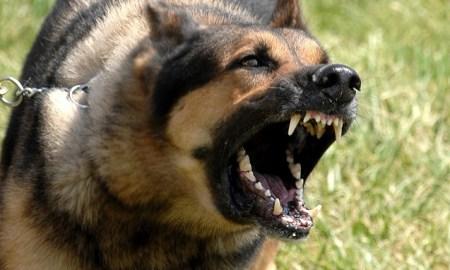 Isère chien arrache oreille enfant