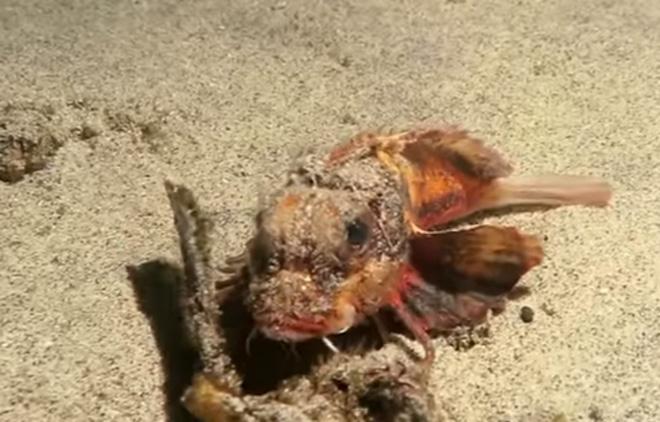 Découverte d'un poisson avec des pattes — Indonésie