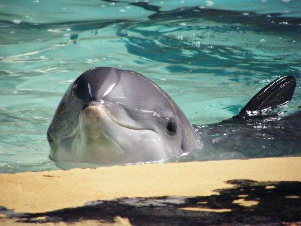 Bañarse con delfines en Algarve