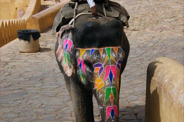 Qué ver en Jaipur: 2 días en la ciudad rosa