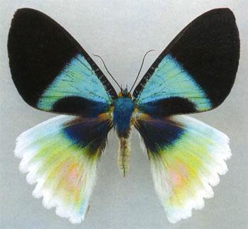 Мир бабочек. Анатомия красоты, почему бабочки такие красивые