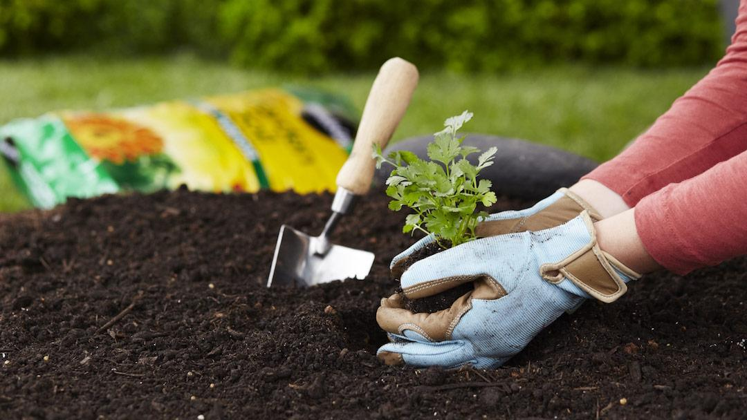 Start with Miracle-Gro Soil - hands in Soil