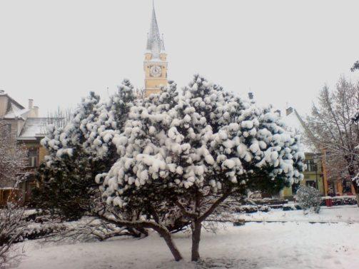 Medias iarna 2010