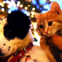 Campanie de adoptii Animal Life