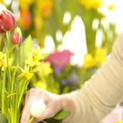 "Floraria ""Orhideea"" Medias angajeaza personal"