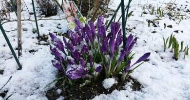 zahrádka v zimě a jarní zahrada