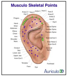 Musculo Skeletal Points