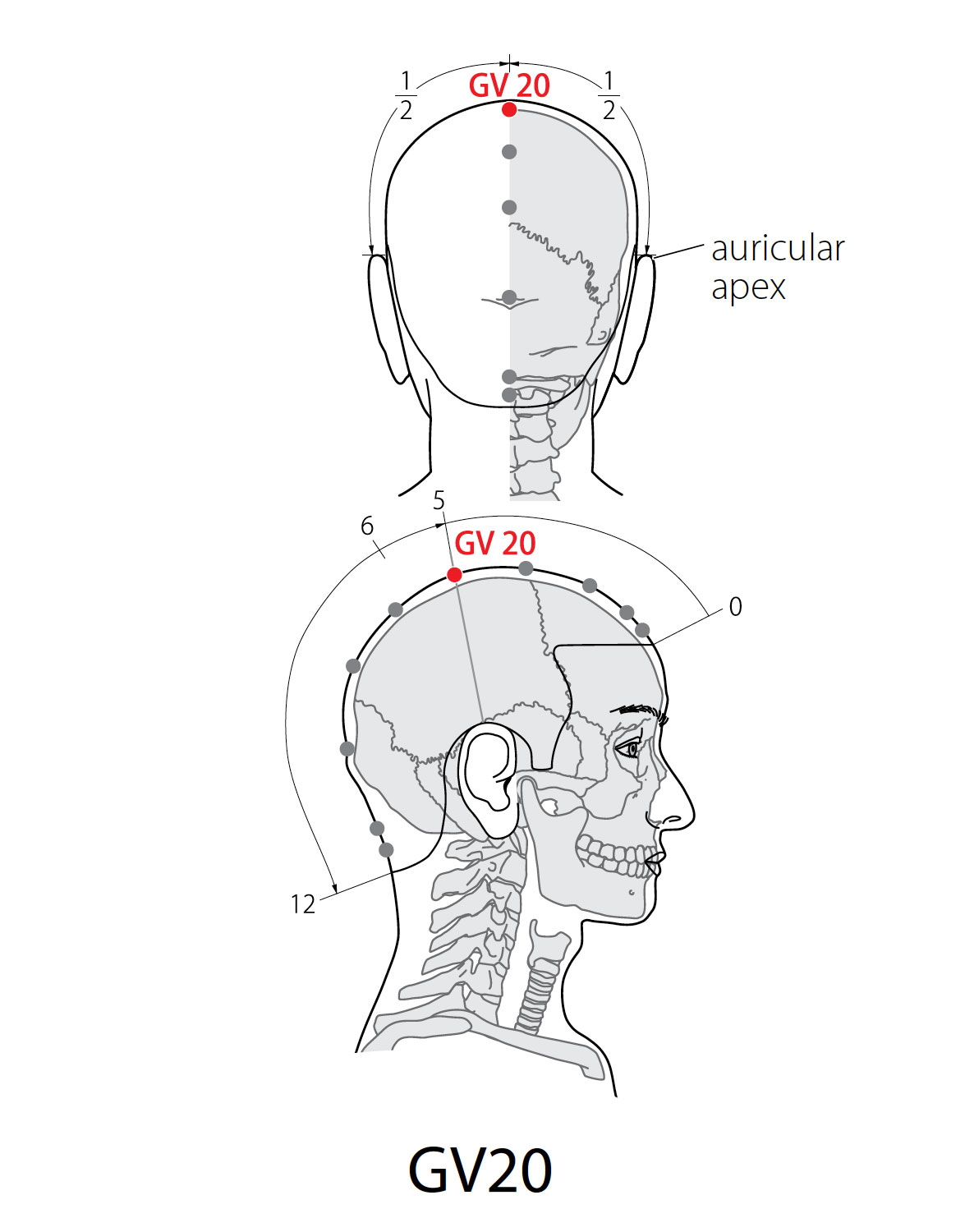 Acupuncture Point: Governor Vessel 20 - Acupuncture Technology News