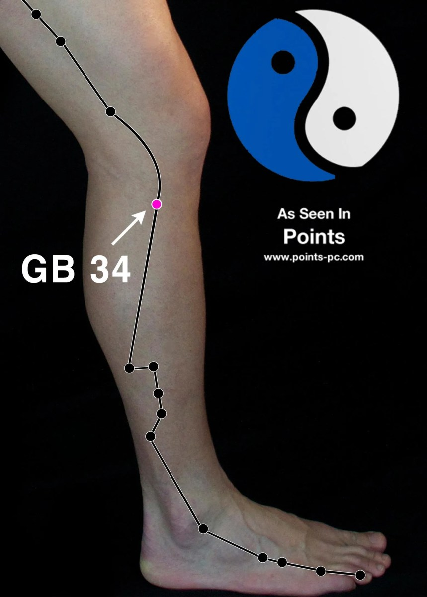 Acupuncture Point: Gallbladder 34