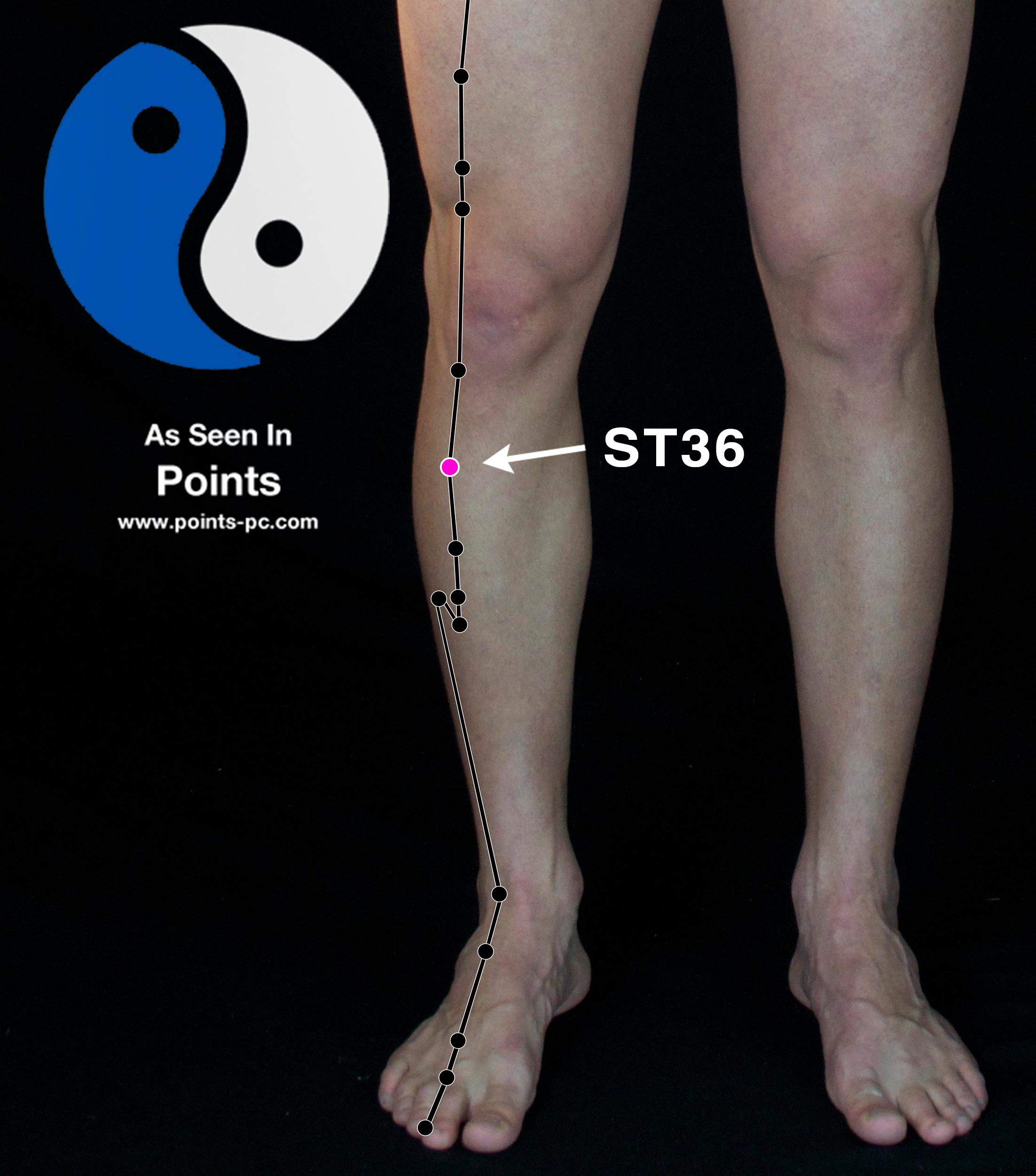 Acupuncture Point: Stomach 36