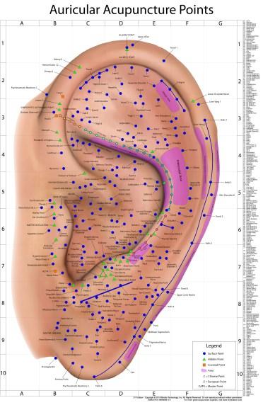auricular wall chart