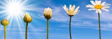 groei psychosociale therapie