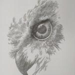 eagle. buzzard, bird, animal, calligram