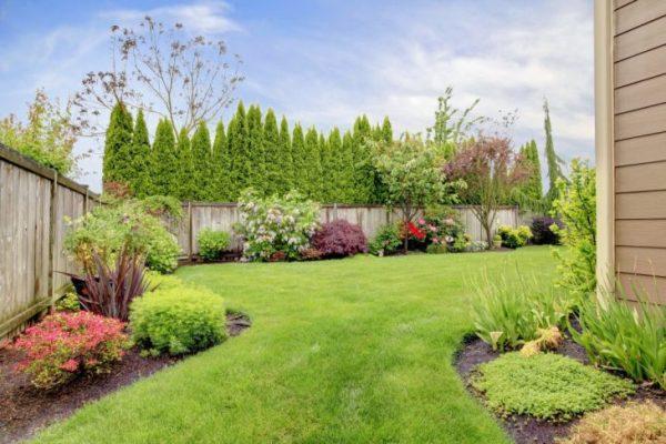 Как правильно делать газон на даче 45 фото примеров