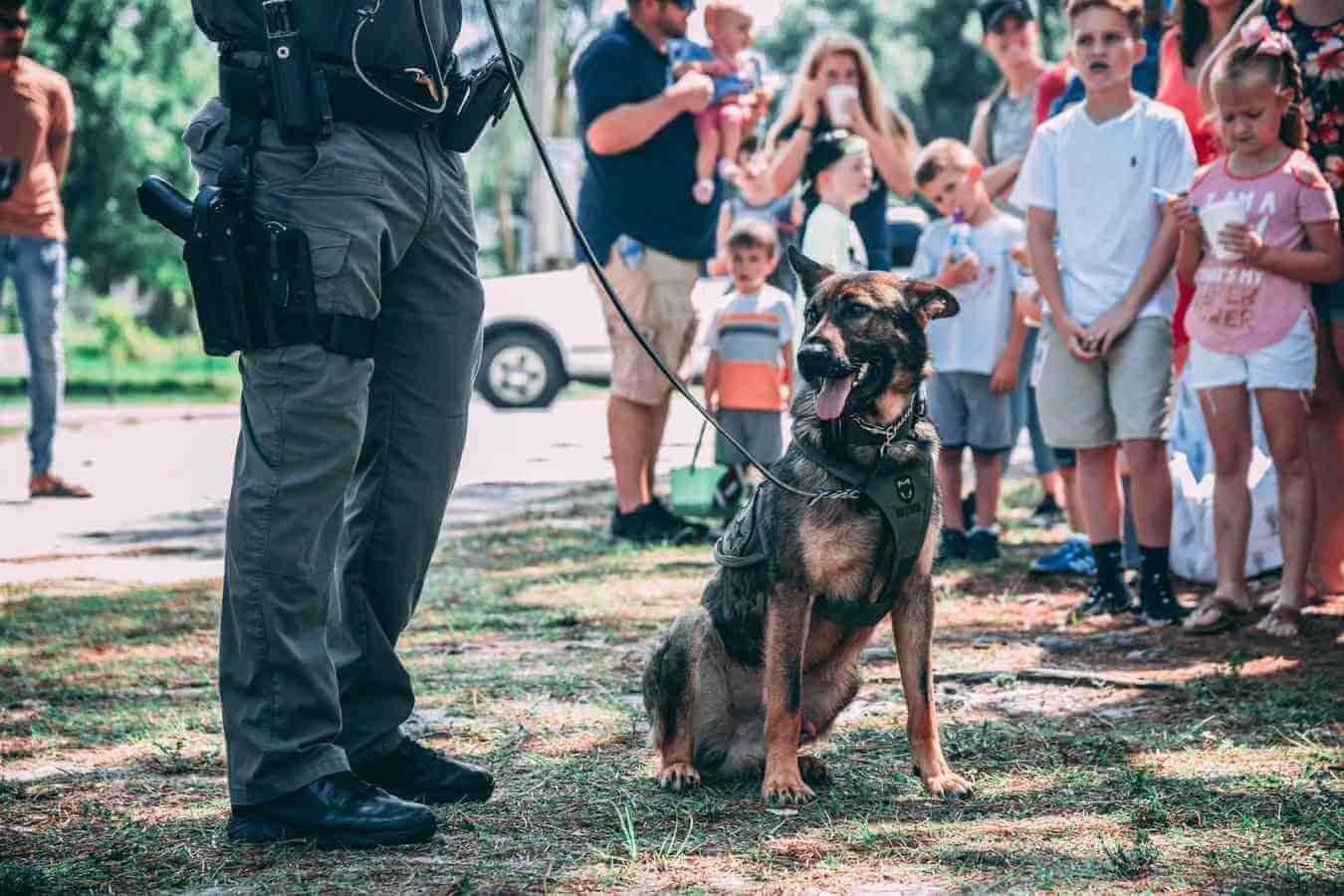 Poljaci odlučili: Psi koji su radili za državu imaju pravo na – mirovinu!