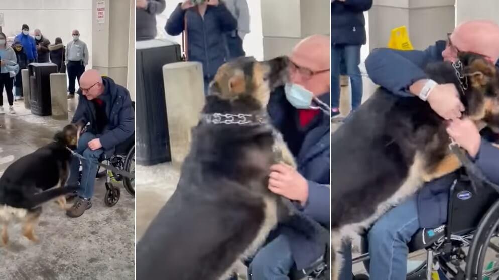 Umirovljenik prije četiri mjeseca udomio kujicu koju nitko nije htio. Sada je ona njemu spasila život