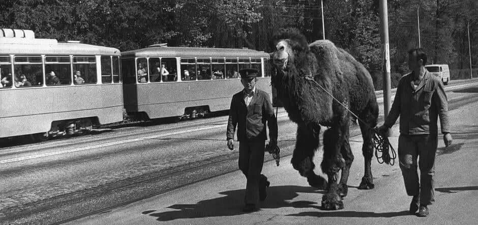 Odbjegla deva prošetala Maksimirom pa vraćena natrag u Zoološki vrt