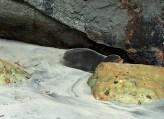 Meeting the first seal ever, Wharariki, South Island