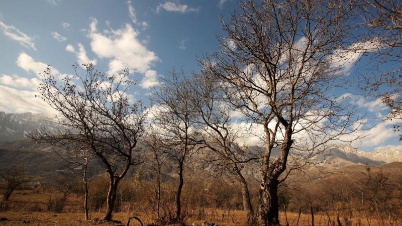 PA294717  Arslanbob, Kyrgyzstan, Kirgistán, walnut forest, bosque nogal