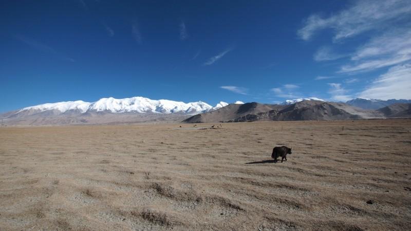 PB115232 China, Karakorum, karakul, silk road, ruta seda