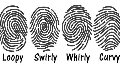 Fact Friday – fingerprints